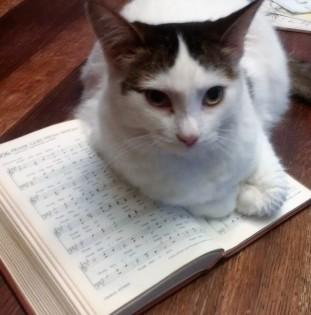 606 cat